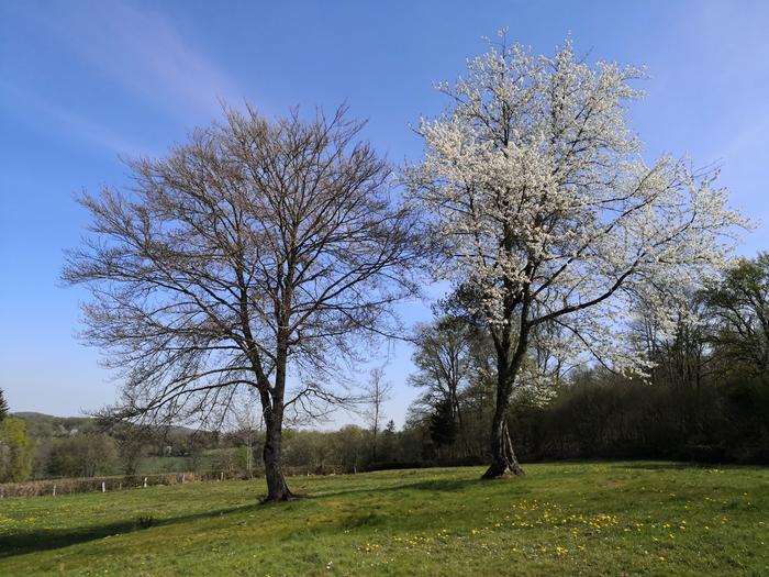 arbres-danss_700