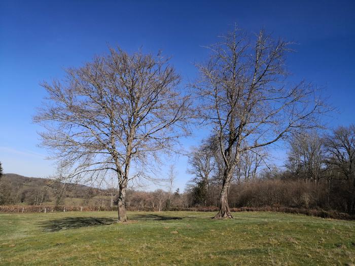 arbres-danss_hiver_700